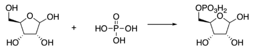 Synthesis of Ribose Phosphate